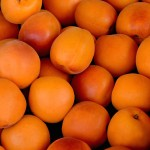 Apricot Early Orange